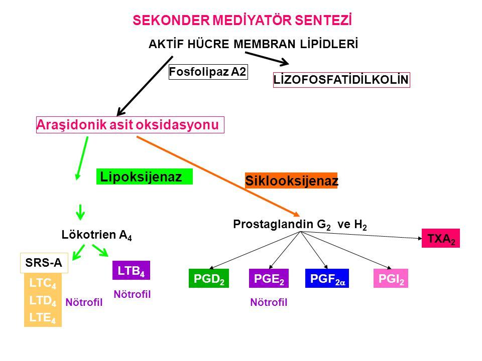 SEKONDER MEDİYATÖR SENTEZİ AKTİF HÜCRE MEMBRAN LİPİDLERİ Fosfolipaz A2 LİZOFOSFATİDİLKOLİN Araşidonik asit oksidasyonu Prostaglandin G 2 ve H 2 PGD 2