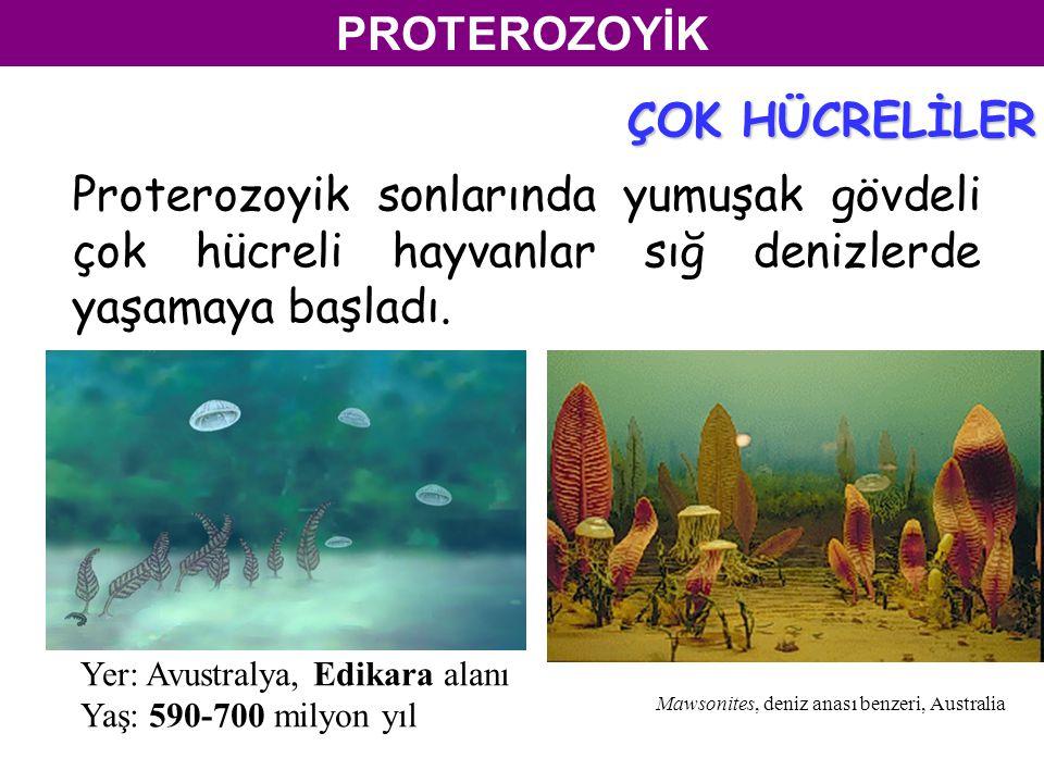 Proterozoyik sonlarında yumuşak gövdeli çok hücreli hayvanlar sığ denizlerde yaşamaya başladı.