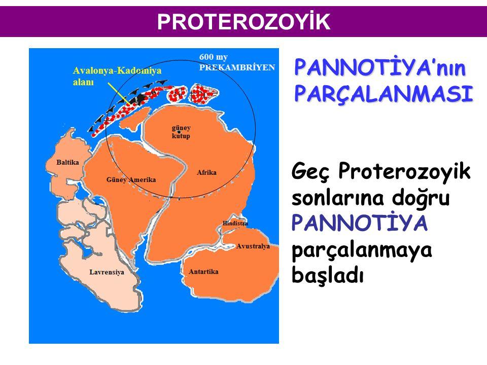 PROTEROZOYİK Geç Proterozoyik sonlarına doğru PANNOTİYA parçalanmaya başladı PANNOTİYA'nınPARÇALANMASI