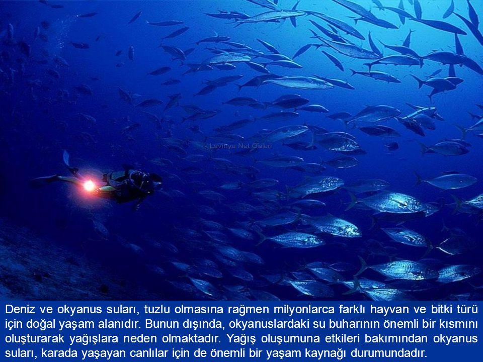Deniz ve okyanus suları, tuzlu olmasına rağmen milyonlarca farklı hayvan ve bitki türü için doğal yaşam alanıdır. Bunun dışında, okyanuslardaki su buh