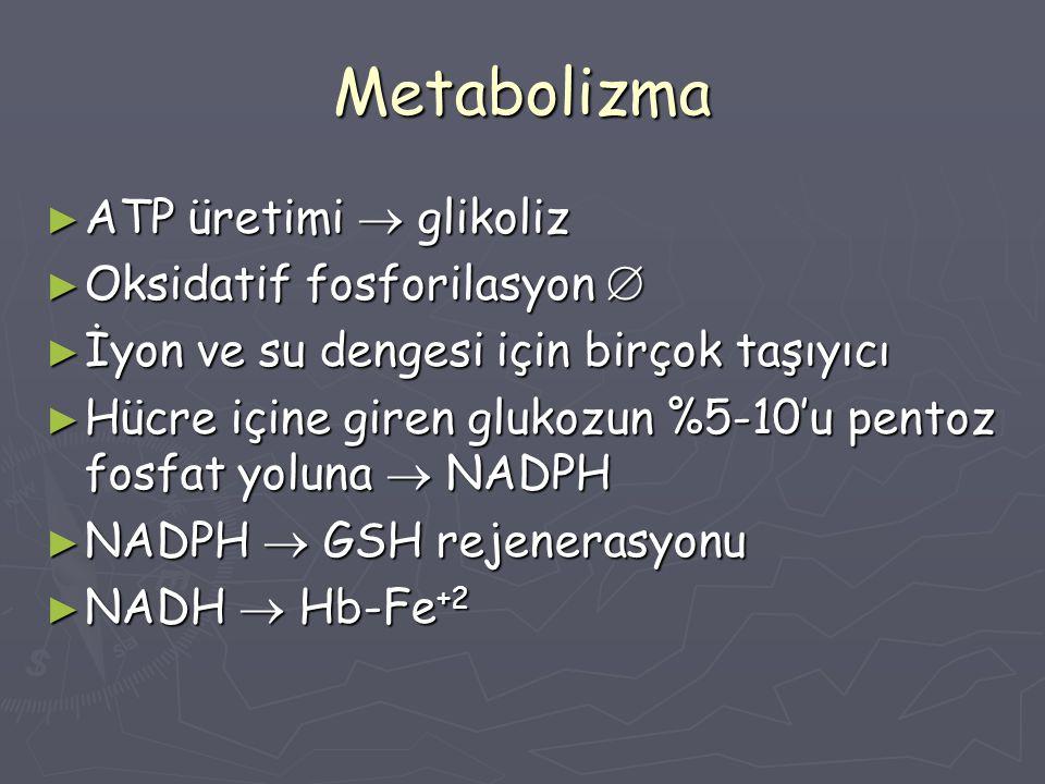 Metabolizma ► ATP üretimi  glikoliz ► Oksidatif fosforilasyon  ► İyon ve su dengesi için birçok taşıyıcı ► Hücre içine giren glukozun %5-10'u pentoz