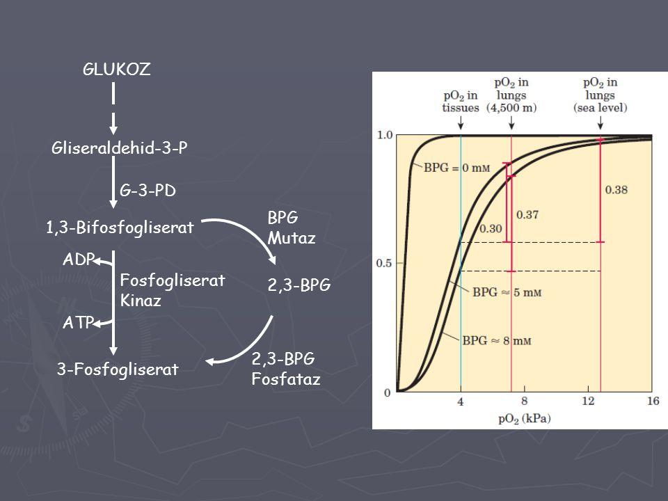 GLUKOZ Gliseraldehid-3-P 1,3-Bifosfogliserat G-3-PD 3-Fosfogliserat 2,3-BPG Fosfogliserat Kinaz ADP ATP BPG Mutaz 2,3-BPG Fosfataz