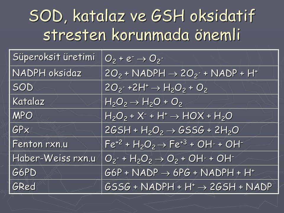 SOD, katalaz ve GSH oksidatif stresten korunmada önemli Süperoksit üretimi O 2 + e -  O 2. NADPH oksidaz 2O 2 + NADPH  2O 2. + NADP + H + SOD 2O 2.