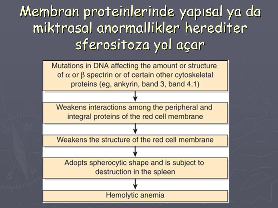 Membran proteinlerinde yapısal ya da miktrasal anormallikler herediter sferositoza yol açar