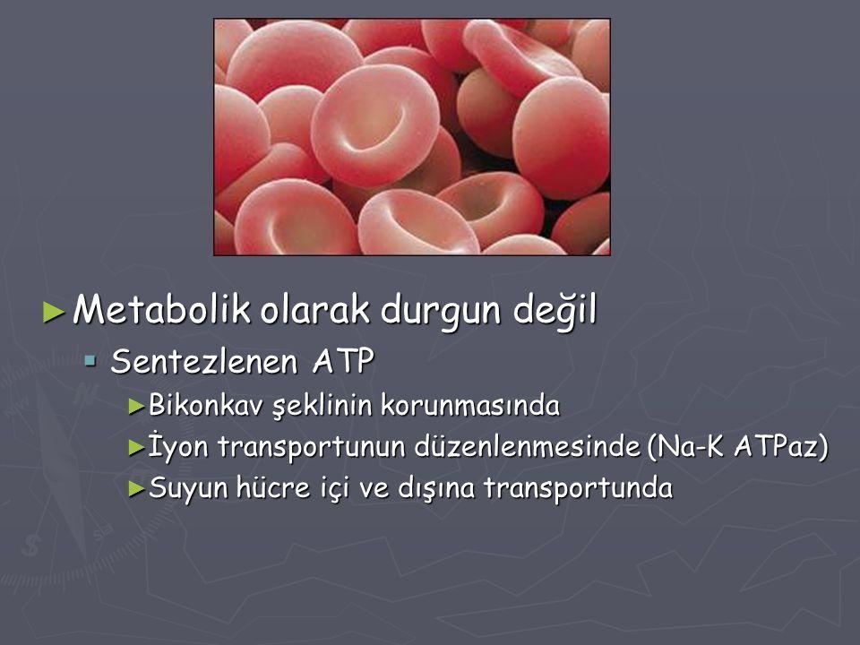 ► Metabolik olarak durgun değil  Sentezlenen ATP ► Bikonkav şeklinin korunmasında ► İyon transportunun düzenlenmesinde (Na-K ATPaz) ► Suyun hücre içi