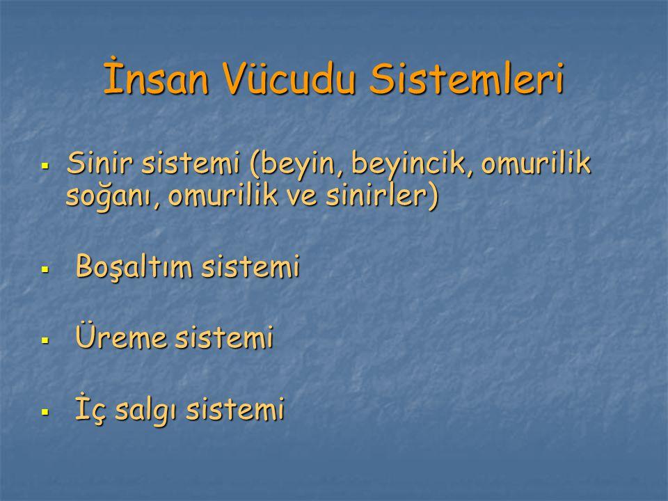 İnsan Vücudu Sistemleri  Sinir sistemi (beyin, beyincik, omurilik soğanı, omurilik ve sinirler)  Boşaltım sistemi  Üreme sistemi  İç salgı sistemi