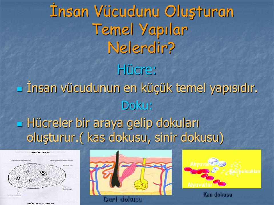 İnsan Vücudunu Oluşturan Temel Yapılar Nelerdir? İnsan Vücudunu Oluşturan Temel Yapılar Nelerdir? Hücre: İnsan vücudunun en küçük temel yapısıdır. İns