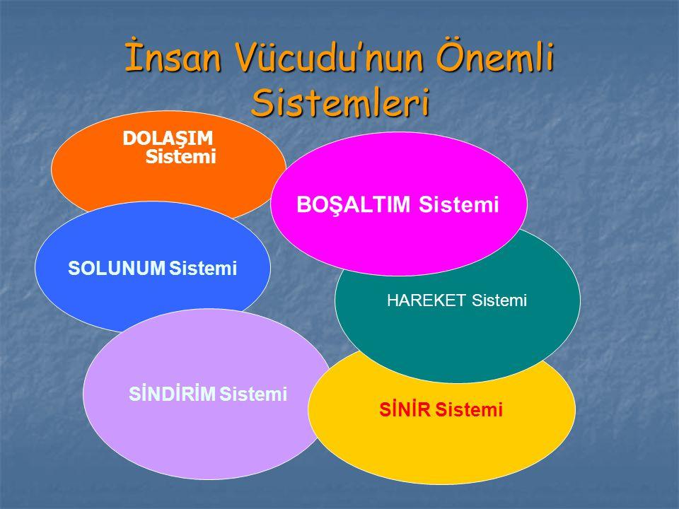 İnsan Vücudu Sistemleri Sistemler:  Hareket sistemi (iskelet, eklemler, kaslar)  Dolaşım sistemi (kalp, damarlar, kan)  Solunum sistemi (burun, yutak, gırtlak, soluk borusu, bronşlar, bronşçuklar, akciğerler)  Sindirim sistemi (ağız boşluğu, sindirim kanalı organları ve yardımcı sindirim organları) 