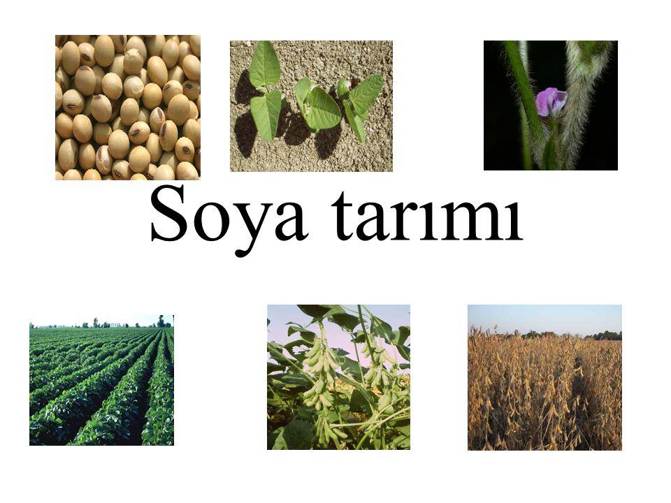 Soya, dik büyüyen, dallanabilen, küçük çalı görünümlü, sap ve yaprakları gri, kahverengi ve bunların değişik tonları gibi farklı renklerdeki tüylerle kaplı, yetişme şartlarına bağlı olarak 30 cm ile 2 m arasında boylanabilen, beyaz veya mor renklerde çiçeğe sahip, her birinde 1-5 arasında tane bulunabilen baklalar oluşturan, kazık köklü, köklerinde havanın serbest azotunu bağlayabilen Rhizobium japonicum.