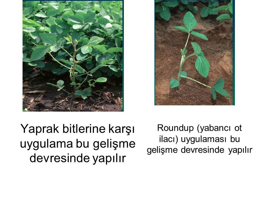 Yaprak bitlerine karşı uygulama bu gelişme devresinde yapılır Roundup (yabancı ot ilacı) uygulaması bu gelişme devresinde yapılır
