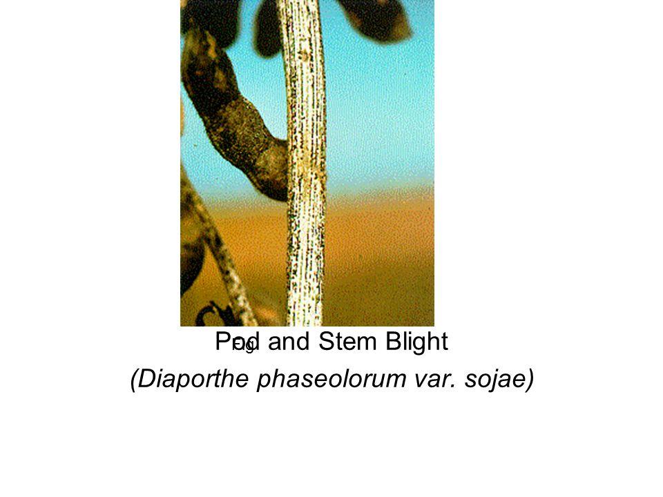 Fig Pod and Stem Blight (Diaporthe phaseolorum var. sojae)
