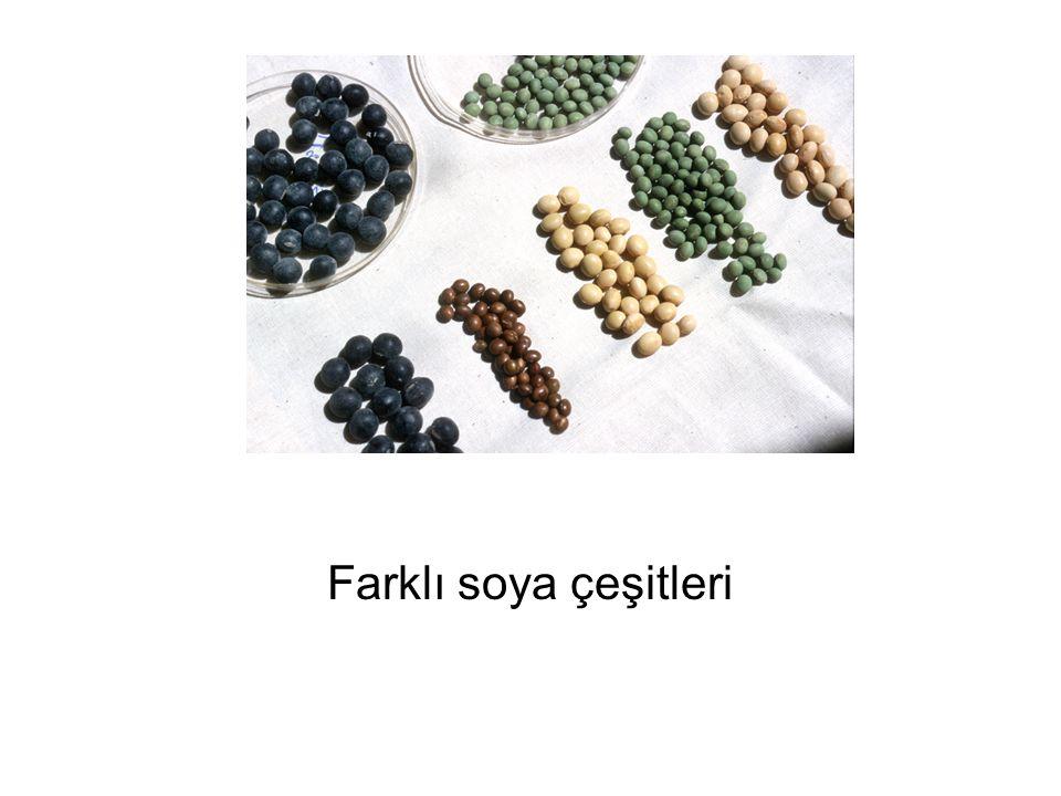 Farklı soya çeşitleri