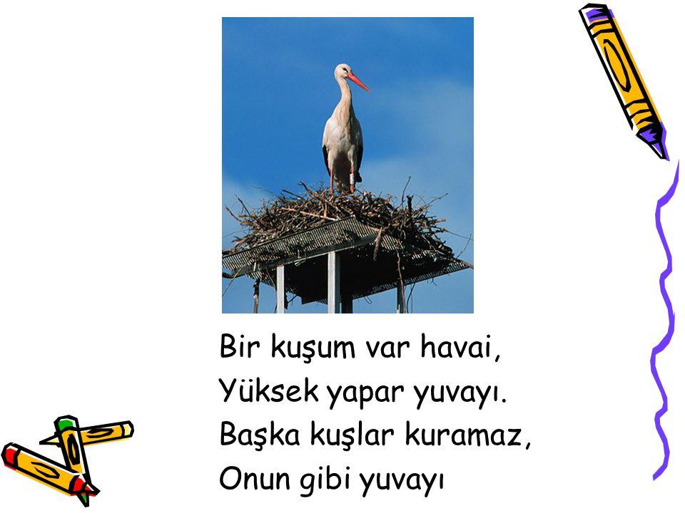 Bir kuşum var havai, Yüksek yapar yuvayı. Başka kuşlar kuramaz, Onun gibi yuvayı