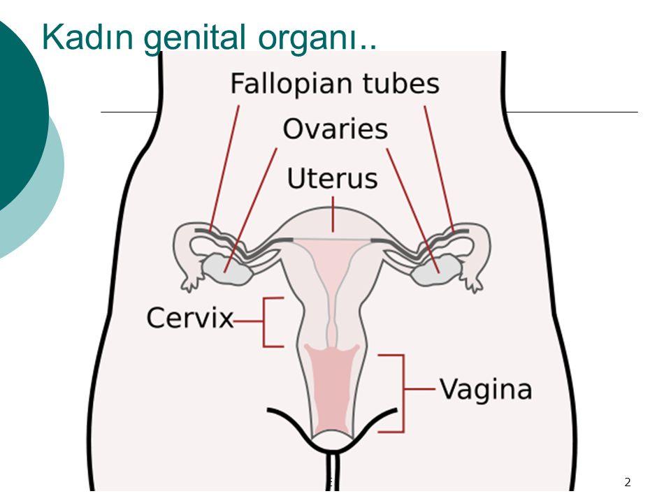 NİĞDE KETEM2 Kadın genital organı..