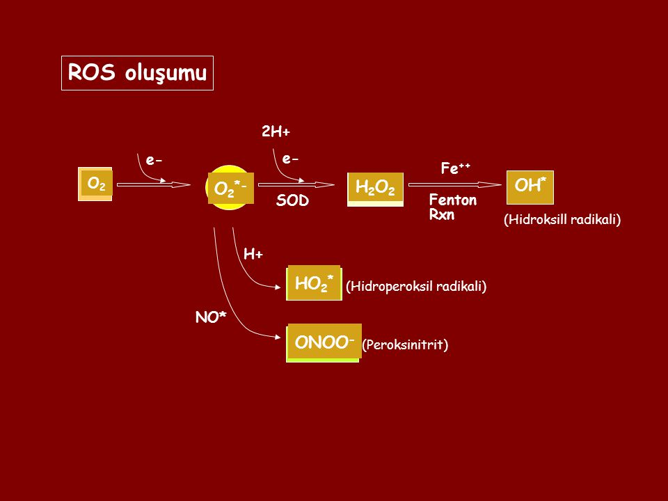 O2O2 O 2 *- e- H2O2H2O2 SOD 2H+ H+ HO 2 * NO* ONOO - OH * Fe ++ Fenton Rxn ROS oluşumu e- (Hidroperoksil radikali) (Hidroksill radikali) (Peroksinitri