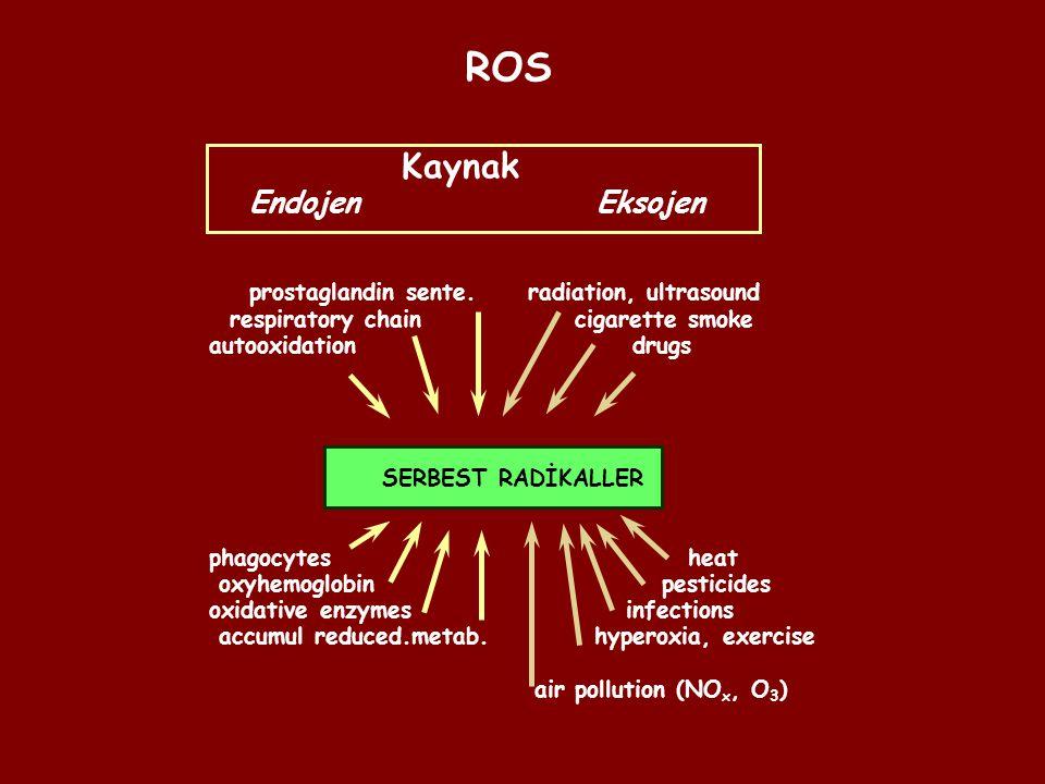 ROS Kaynak Endojen Eksojen prostaglandin sente. radiation, ultrasound respiratory chain cigarette smoke autooxidation drugs SERBEST RADİKALLER phagocy