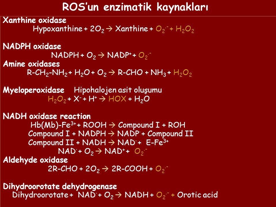ROS'un enzimatik kaynakları Xanthine oxidase Hypoxanthine + 2O 2  Xanthine + O 2.- + H 2 O 2 NADPH oxidase NADPH + O 2  NADP + + O 2.- Amine oxidases R-CH 2 -NH 2 + H 2 O + O 2  R-CHO + NH 3 + H 2 O 2 Myeloperoxidase Hipohalojen asit oluşumu H 2 O 2 + X - + H +  HOX + H 2 O NADH oxidase reaction Hb(Mb)-Fe 3+ + ROOH  Compound I + ROH Compound I + NADPH  NADP · + Compound II Compound II + NADH  NAD · + E-Fe 3+ NAD · + O 2  NAD + + O 2.- Aldehyde oxidase 2R-CHO + 2O 2  2R-COOH + O 2.- Dihydroorotate dehydrogenase Dihydroorotate + NAD · + O 2  NADH + O 2.- + Orotic acid