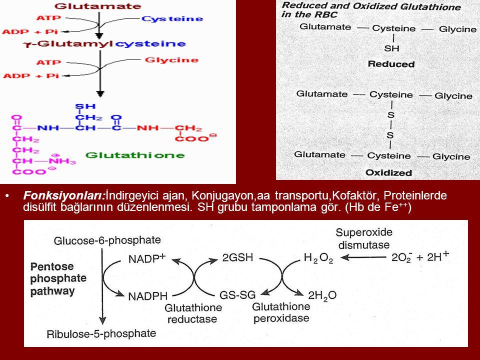 Fonksiyonları:İndirgeyici ajan, Konjugayon,aa transportu,Kofaktör, Proteinlerde disülfit bağlarının düzenlenmesi. SH grubu tamponlama gör. (Hb de Fe +