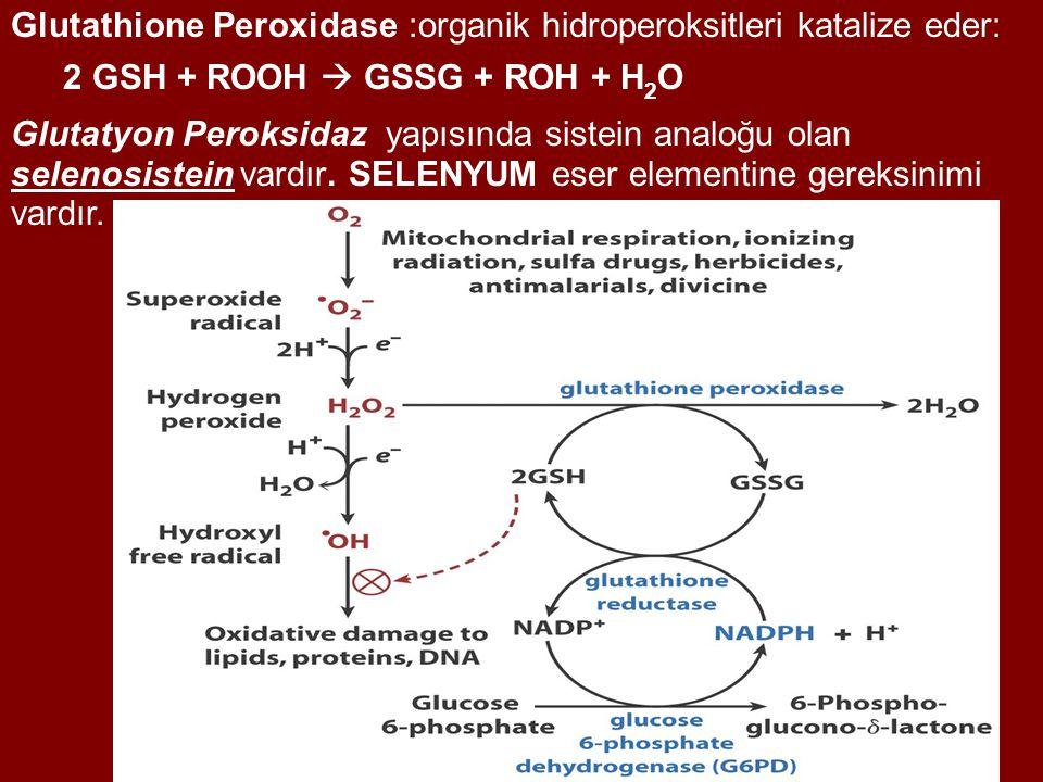 Glutathione Peroxidase :organik hidroperoksitleri katalize eder: 2 GSH + ROOH  GSSG + ROH + H 2 O Glutatyon Peroksidaz yapısında sistein analoğu olan selenosistein vardır.