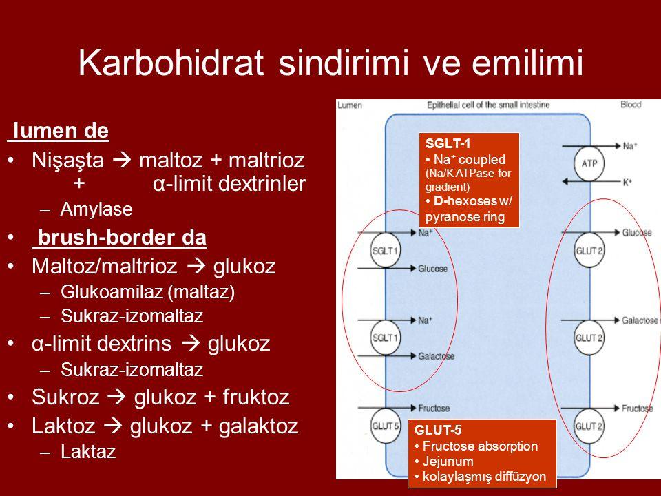 Karbohidrat sindirimi ve emilimi lumen de Nişaşta  maltoz + maltrioz + α-limit dextrinler –Amylase brush-border da Maltoz/maltrioz  glukoz –Glukoami
