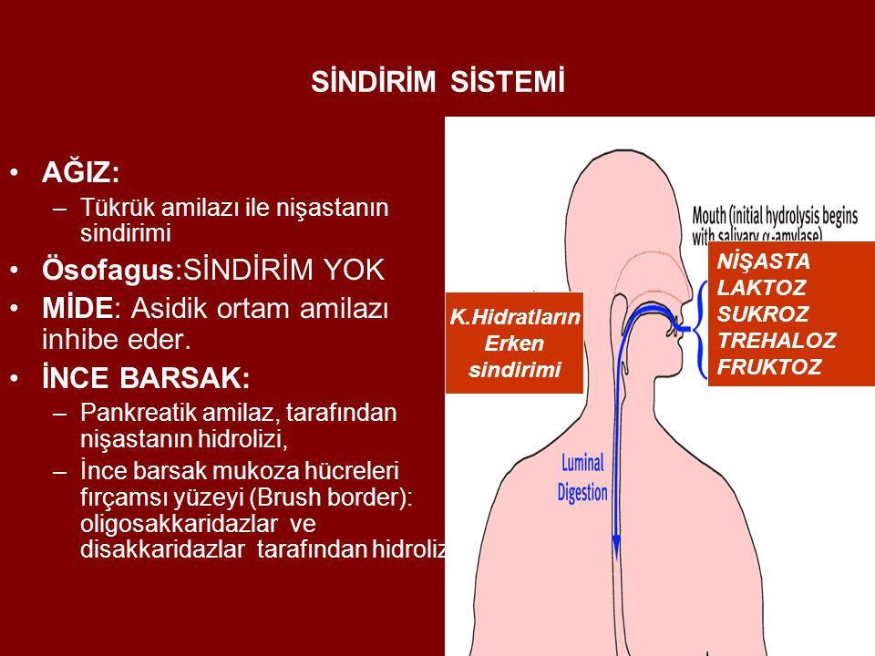 SİNDİRİM SİSTEMİ AĞIZ: –Tükrük amilazı ile nişastanın sindirimi Ösofagus:SİNDİRİM YOK MİDE: Asidik ortam amilazı inhibe eder. İNCE BARSAK: –Pankreatik