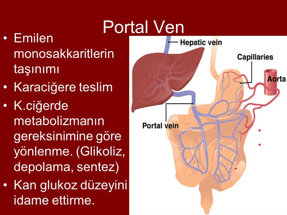 Portal Ven Emilen monosakkaritlerin taşınımı Karaciğere teslim K.ciğerde metabolizmanın gereksinimine göre yönlenme. (Glikoliz, depolama, sentez) Kan