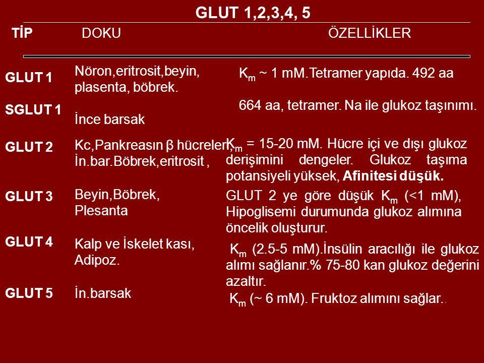 TİP DOKUÖZELLİKLER GLUT 1 SGLUT 1 Nöron,eritrosit,beyin, plasenta, böbrek.