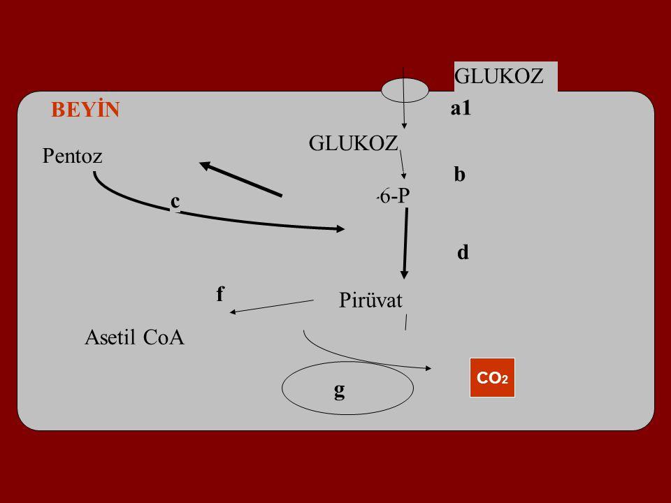 GLUKOZ Glucose-6-P Pirüvat Pentoz a1 b c d BEYİN GLUKOZ Asetil CoA CO 2 f g