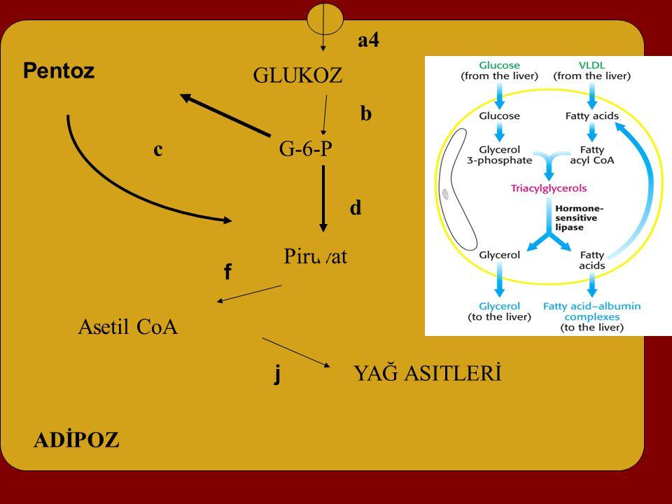 Asetil CoA f GLUKOZ Piruvat Pentoz a4 b c d ADİPOZ G-6-P YAĞ ASITLERİ GLUKOZ j