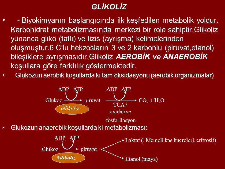 GLİKOLİZ - Biyokimyanın başlangıcında ilk keşfedilen metabolik yoldur.