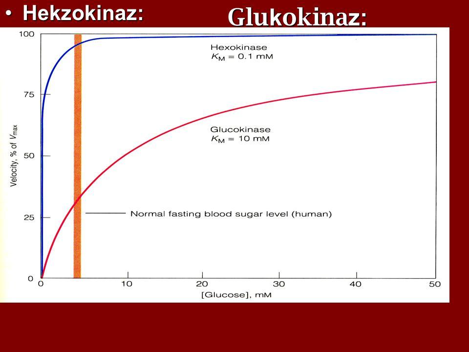 Hekzokinaz:Hekzokinaz:  hemen hemen tüm hücrelerde bulunur.  Diğer mono sakkaritleride fosforile eder, fakat bunlara karşı afinitesi düşüktür.Glukoz