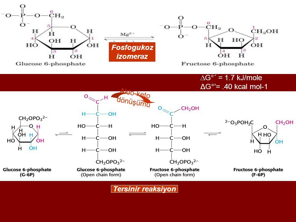  G°´ = 1.7 kJ/mole ΔG°'=.40 kcal mol-1 Fosfogukoz izomeraz Aldo-keto dönüşümü Tersinir reaksiyon