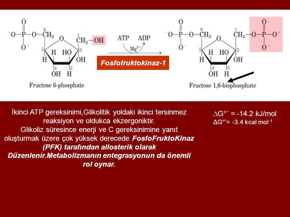 İkinci ATP gereksinimi,Glikolitik yoldaki ikinci tersinmez reaksiyon ve oldukca ekzergoniktir.