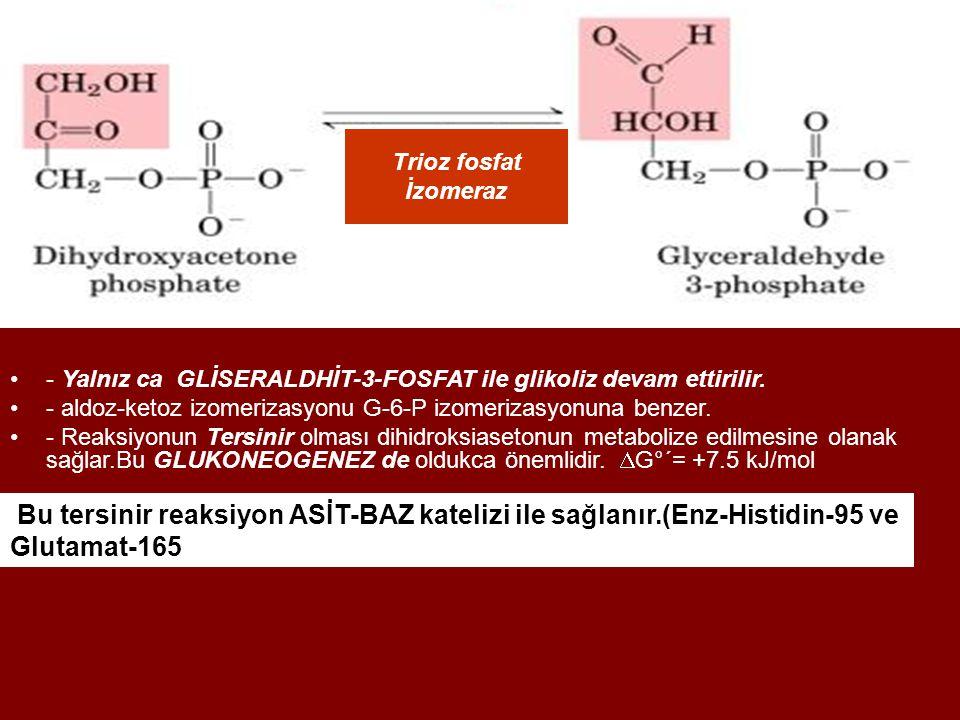 Trioz fosfat İzomeraz - Yalnız ca GLİSERALDHİT-3-FOSFAT ile glikoliz devam ettirilir. - aldoz-ketoz izomerizasyonu G-6-P izomerizasyonuna benzer. - Re