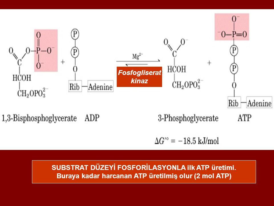 Fosfogliserat kinaz SUBSTRAT DÜZEYİ FOSFORİLASYONLA ilk ATP üretimi. Buraya kadar harcanan ATP üretilmiş olur (2 mol ATP)