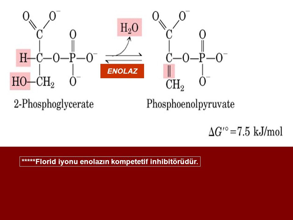 ENOLAZ *****Florid iyonu enolazın kompetetif inhibitörüdür.