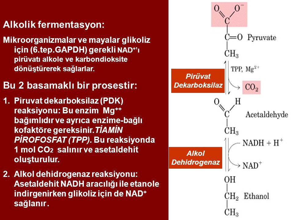 Alkolik fermentasyon: Mikroorganizmalar ve mayalar glikoliz için (6.tep.GAPDH) gerekli NAD + 'ı pirüvatı alkole ve karbondioksite dönüştürerek sağlarl