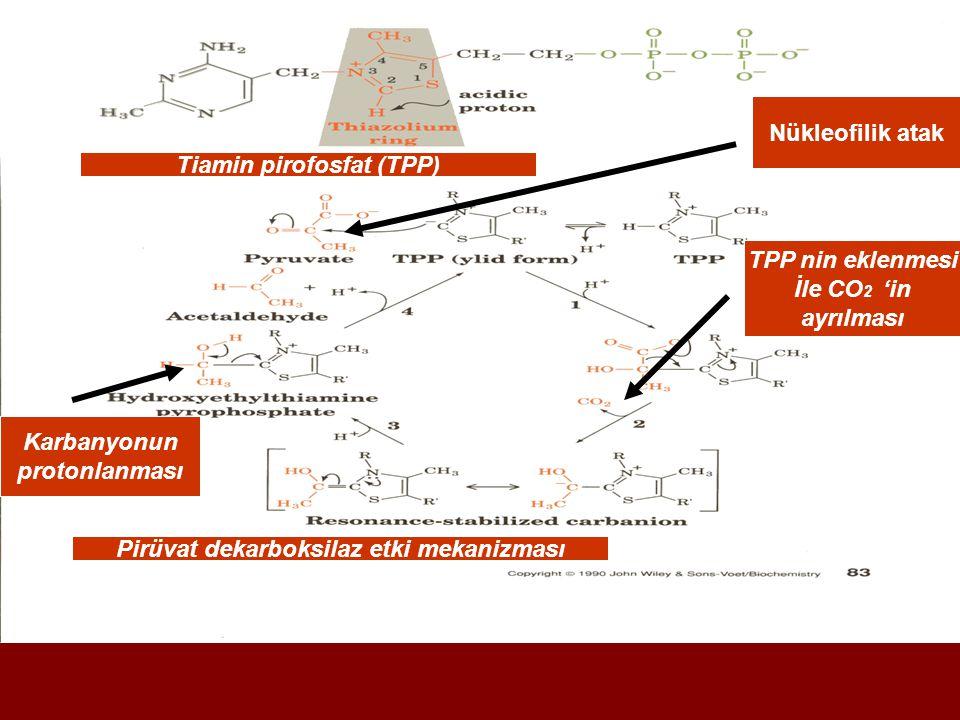 Tiamin pirofosfat (TPP) Pirüvat dekarboksilaz etki mekanizması Nükleofilik atak TPP nin eklenmesi İle CO 2 'in ayrılması Karbanyonun protonlanması