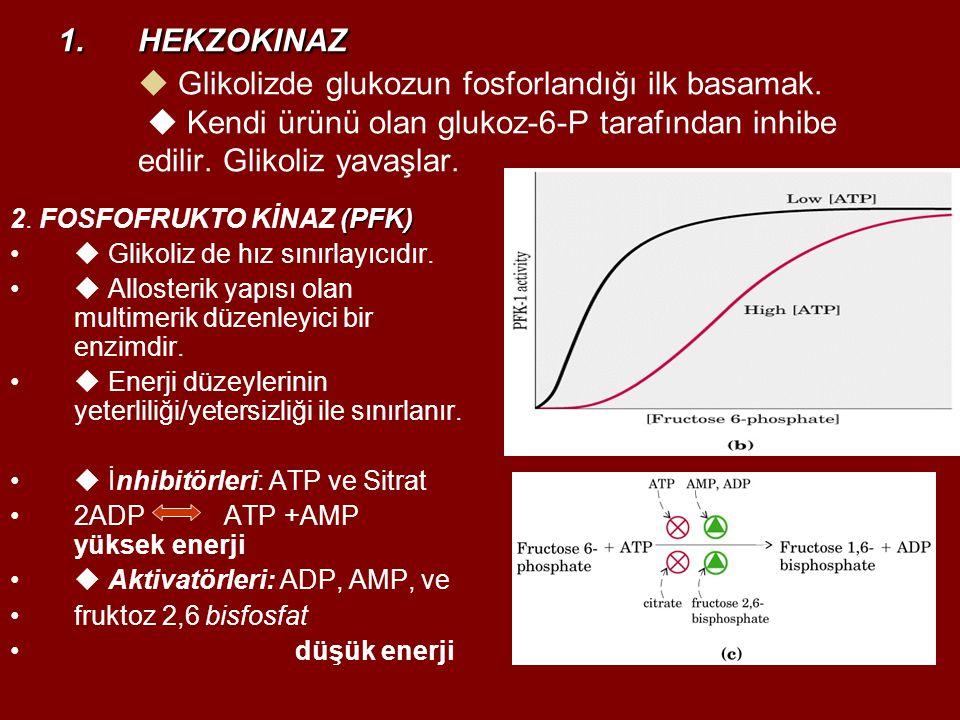 1.HEKZOKINAZ 1.HEKZOKINAZ  Glikolizde glukozun fosforlandığı ilk basamak.  Kendi ürünü olan glukoz-6-P tarafından inhibe edilir. Glikoliz yavaşlar.