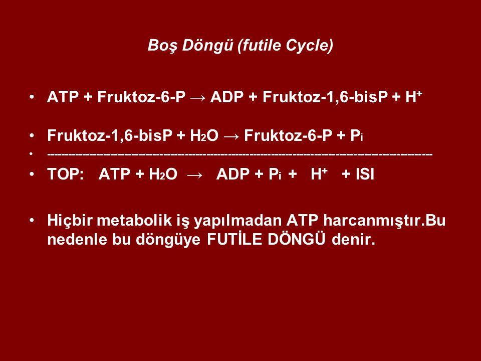 Boş Döngü (futile Cycle) ATP + Fruktoz-6-P → ADP + Fruktoz-1,6-bisP + H + Fruktoz-1,6-bisP + H 2 O → Fruktoz-6-P + P i ------------------------------------------------------------------------------------------------------------ TOP: ATP + H 2 O → ADP + P i + H + + ISI Hiçbir metabolik iş yapılmadan ATP harcanmıştır.Bu nedenle bu döngüye FUTİLE DÖNGÜ denir.