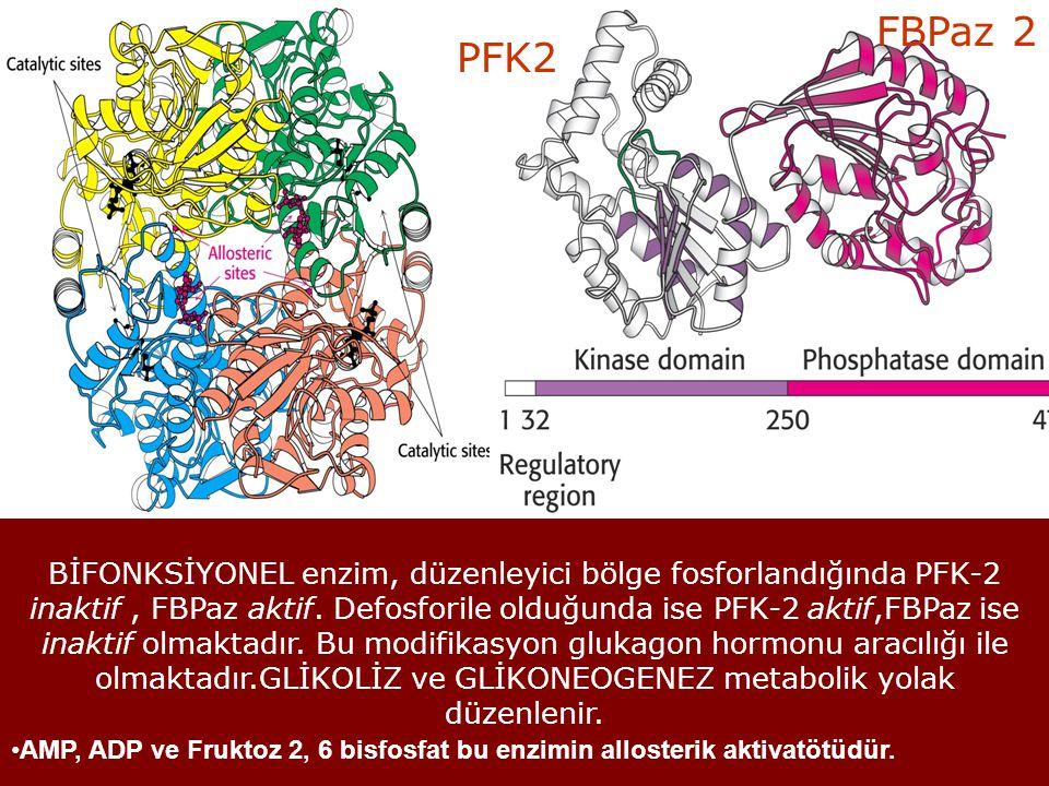 PFK2 FBPaz 2 BİFONKSİYONEL enzim, düzenleyici bölge fosforlandığında PFK-2 inaktif, FBPaz aktif. Defosforile olduğunda ise PFK-2 aktif,FBPaz ise inakt