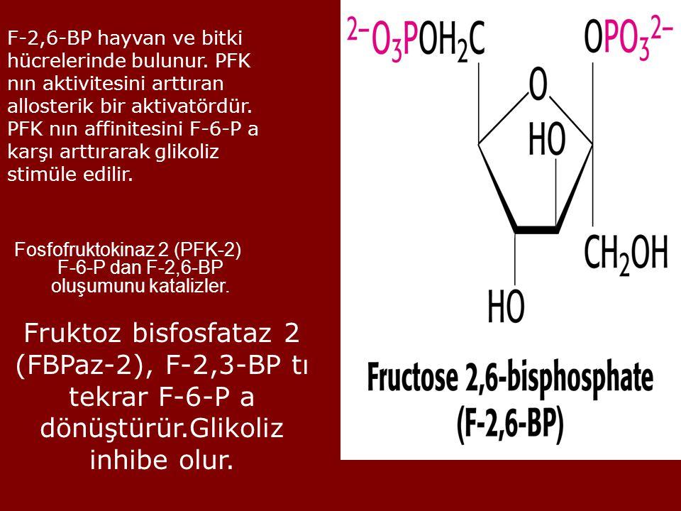 F-2,6-BP hayvan ve bitki hücrelerinde bulunur. PFK nın aktivitesini arttıran allosterik bir aktivatördür. PFK nın affinitesini F-6-P a karşı arttırara