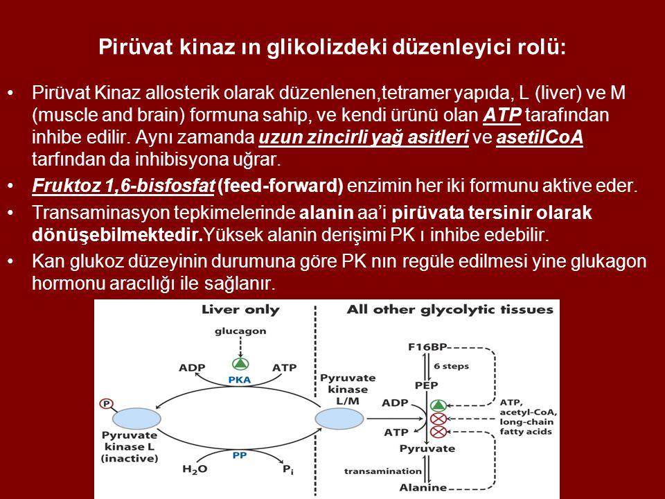 Pirüvat kinaz ın glikolizdeki düzenleyici rolü: Pirüvat Kinaz allosterik olarak düzenlenen,tetramer yapıda, L (liver) ve M (muscle and brain) formuna