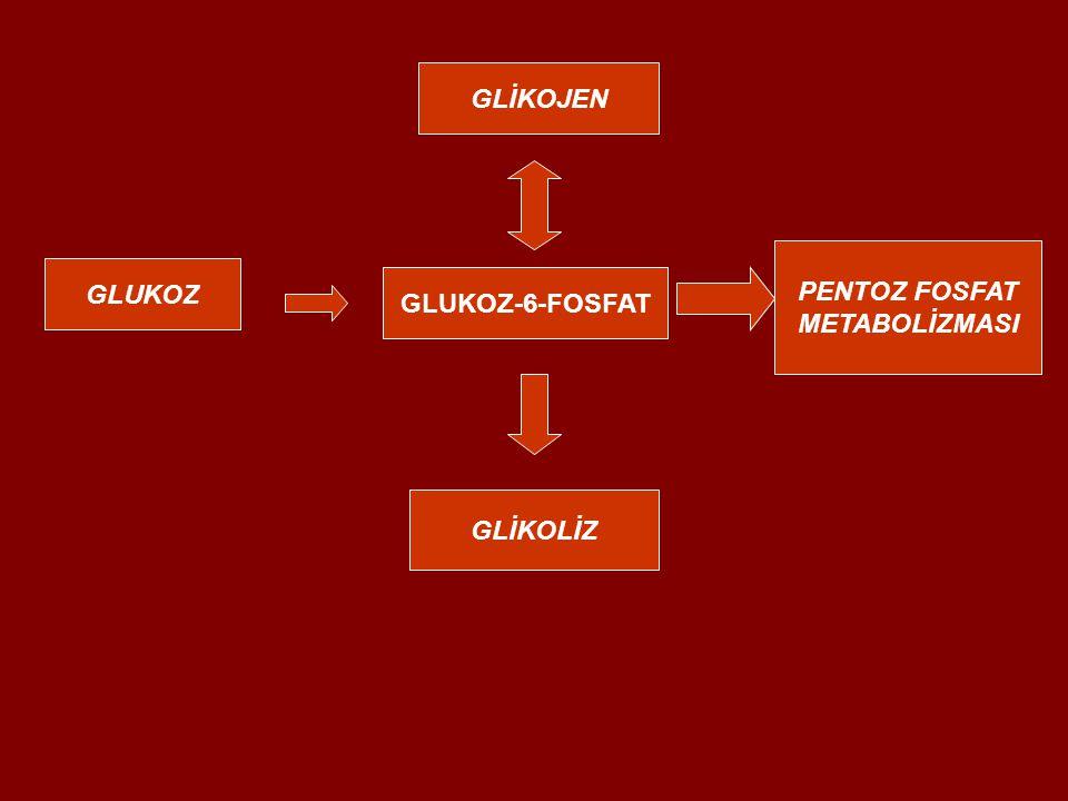 GLUKOZ GLUKOZ-6-FOSFAT GLİKOJEN PENTOZ FOSFAT METABOLİZMASI GLİKOLİZ