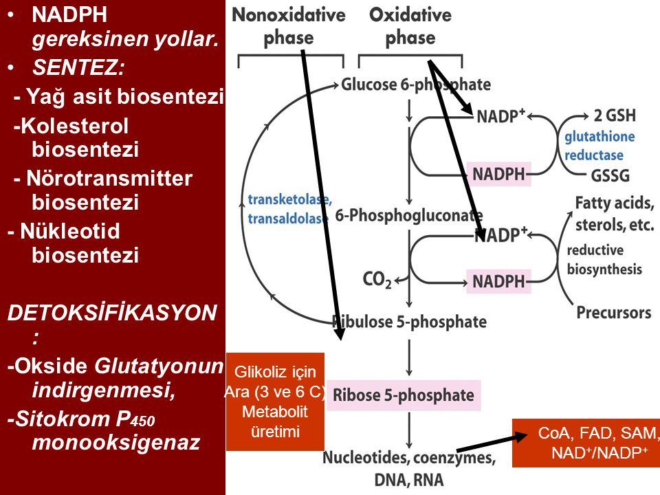 NADPH gereksinen yollar. SENTEZ: - Yağ asit biosentezi -Kolesterol biosentezi - Nörotransmitter biosentezi - Nükleotid biosentezi DETOKSİFİKASYON : -O