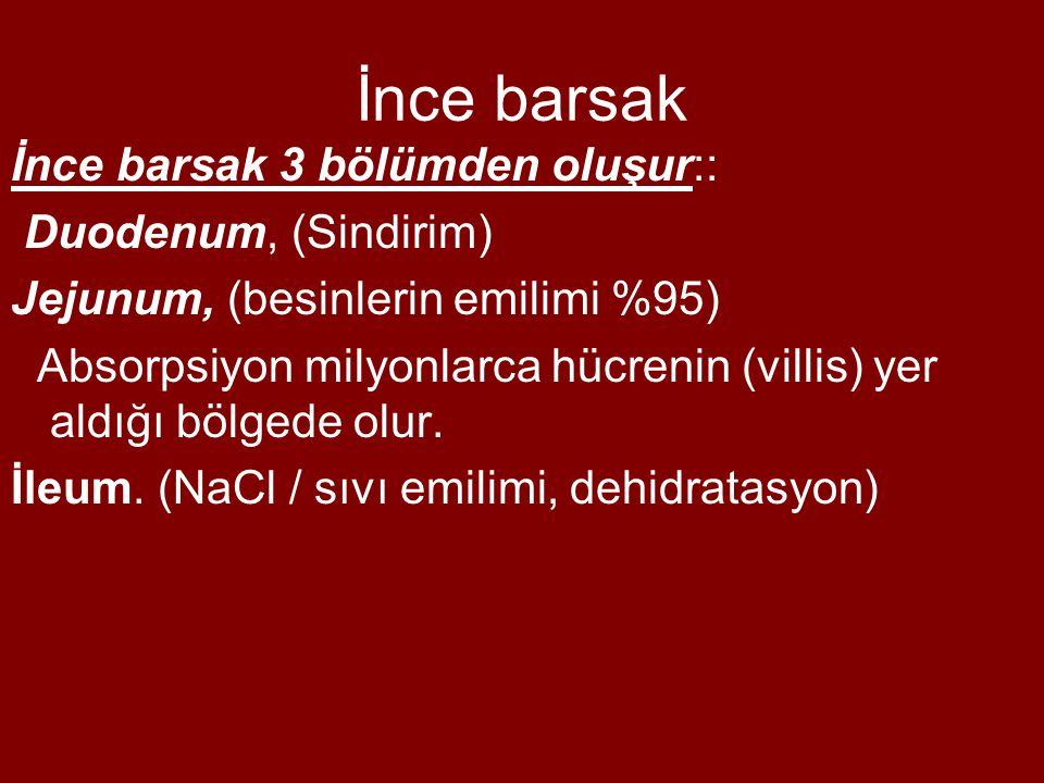 İnce barsak İnce barsak 3 bölümden oluşur:: Duodenum, (Sindirim) Jejunum, (besinlerin emilimi %95) Absorpsiyon milyonlarca hücrenin (villis) yer aldığı bölgede olur.