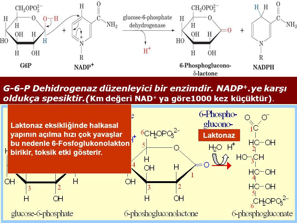 G-6-P Dehidrogenaz düzenleyici bir enzimdir. NADP +.ye karşı oldukça spesiktir.( Km değeri NAD + ya göre1000 kez küçüktür). Laktonaz Laktonaz eksikliğ