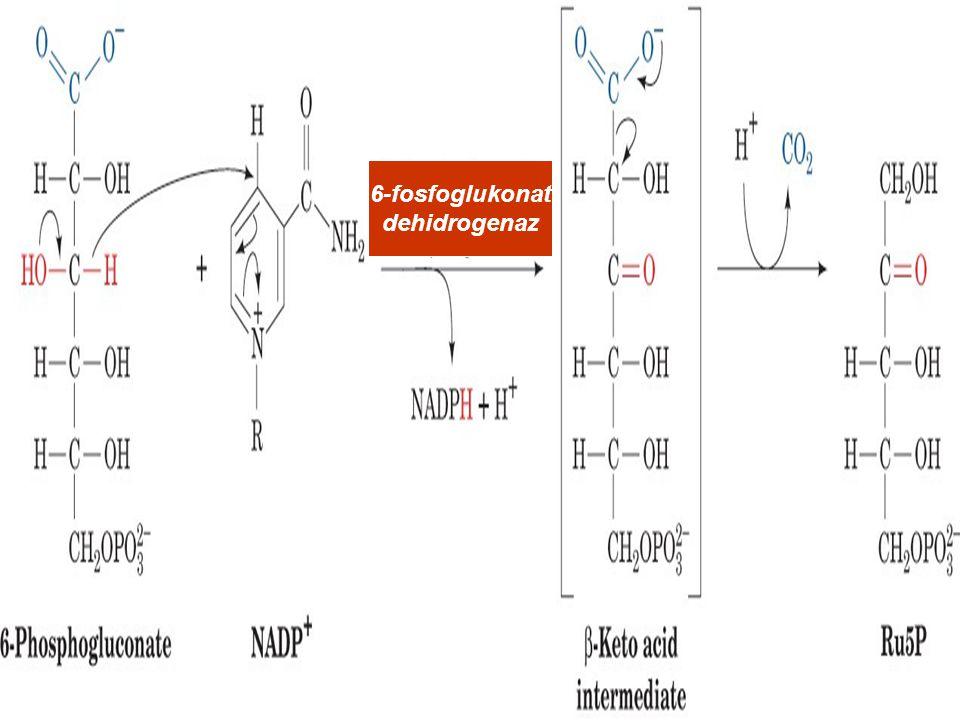 6-fosfoglukonat dehidrogenaz