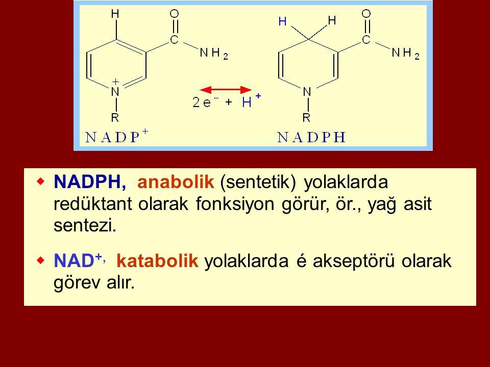  NADPH,, anabolik (sentetik) yolaklarda redüktant olarak fonksiyon görür, ör., yağ asit sentezi.  NAD +, katabolik yolaklarda é akseptörü olarak gör