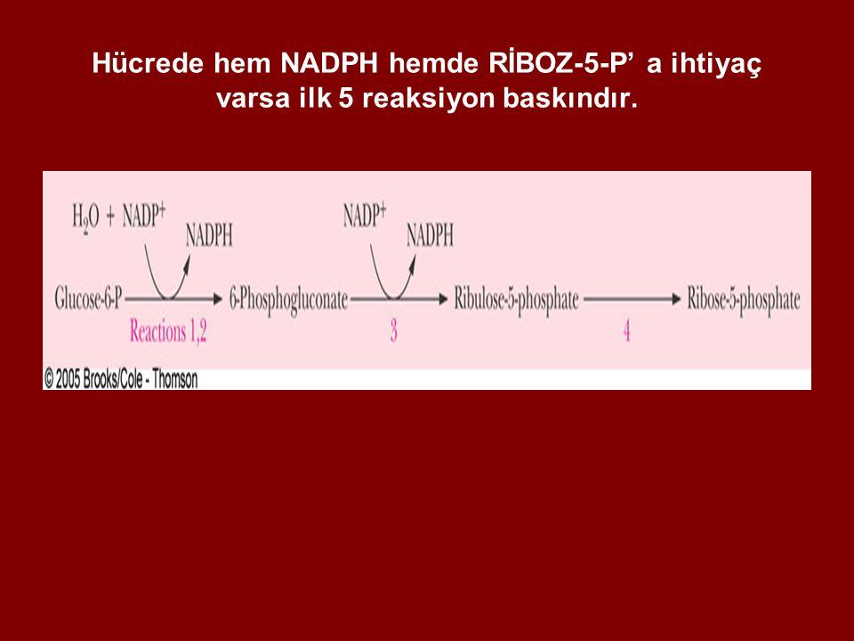 Hücrede hem NADPH hemde RİBOZ-5-P' a ihtiyaç varsa ilk 5 reaksiyon baskındır.